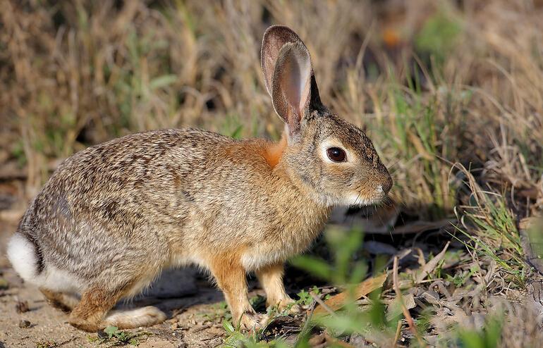 舌尖上的贝爷-野兔