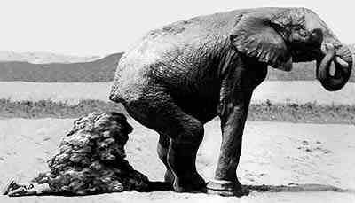 舌尖上的贝爷-大象粪便里的液体