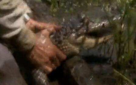 舌尖上的贝爷-鳄鱼