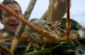 舌尖上的贝爷-龙虾