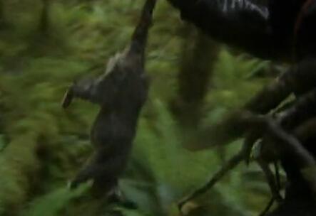 舌尖上的贝爷-负鼠