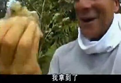 贝爷教你怎么摘取野生蜂蜜